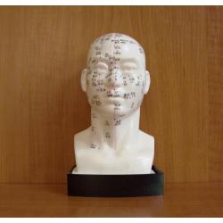 Demonstrációs fej modell