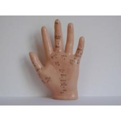 Demonstrációs kéz