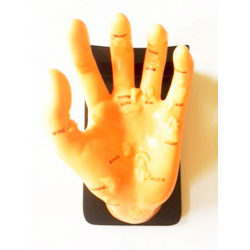 Demonstrációs reflex zónás kéz
