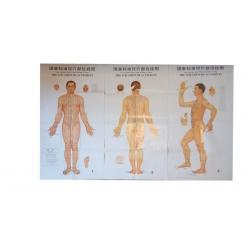 Az akupunktúrás pontok elhelyezkedése (3részes poszter)