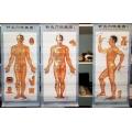 3 részes kínai akupunktúrás testposzter