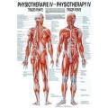 Fizioterápia IV.