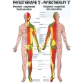 Fizioterápia V.