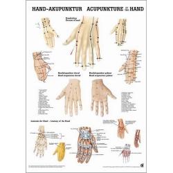Kéz akupunktúra