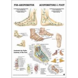 Láb akupunktúra