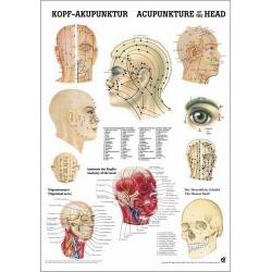 Fej akupunktúra