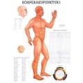 Testakupunktúra I.