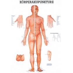 Testakupunktúra II.