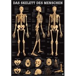 Emberi csontváz fekete háttéren